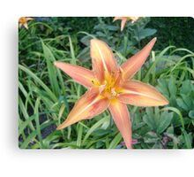 6-Pointed Flower Canvas Print