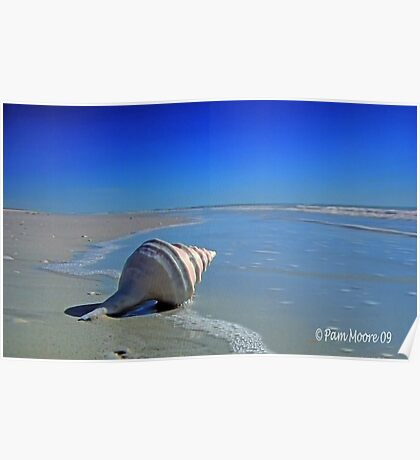 The Shell on the Beach Poster
