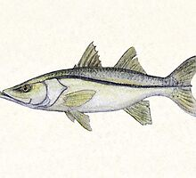 Snook Watercolor by Amber Marine