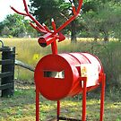 Big Red Reindeer Box by Penny Smith