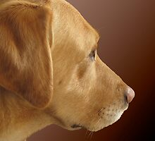 Bailey......In Profile by Fe Messenger