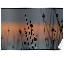 Within the Reeds 4 Poster