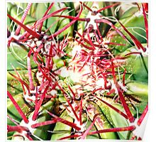 Red Cactus Thorns Poster