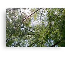 Glistening Fir Canvas Print