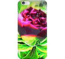 Bold Beauty of the Rose iPhone Case/Skin