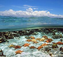 Group of starfish underwater and blue sky with cloud by Seaphotoart