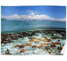 Group of starfish underwater and blue sky with cloud Poster