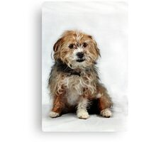 Little Scruffy Duffs Canvas Print
