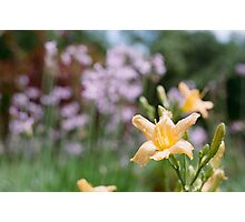 Spring Flowers in Audobon Photographic Print