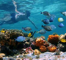 Snorkeling in a coral reef with tropical fish by Dam - www.seaphotoart.com