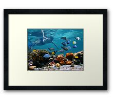 Snorkeling in a coral reef with tropical fish Framed Print