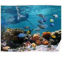 Snorkeling in a coral reef with tropical fish Poster