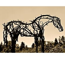 Wooden Horse at Sunset Photographic Print