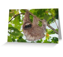 Brown throated sloth in the jungle Greeting Card