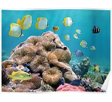 Colorful tropical fish with sea anemones underwater Poster