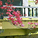 Balcony w/ Dogwood by ShutterlyPrfct