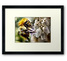 don't worry bee happy ..... Framed Print