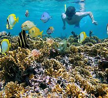 Coral reef fish and snorkeler by Dam - www.seaphotoart.com