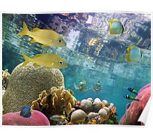 Colorful tropical fish and corals underwater Poster