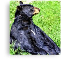 Brown Bear sitting on a hill Canvas Print