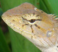 Relaxing Lizard (Close Up) by oliverjridgill