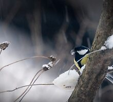 Great Tit and cold winter by Sergey Bezberdy
