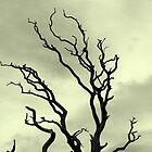 Eery tree by Patrick Lemmens