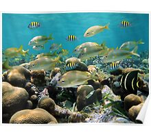 School of tropical fish in a shallow coral reef Poster