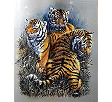 Tiger cubs three. Photographic Print