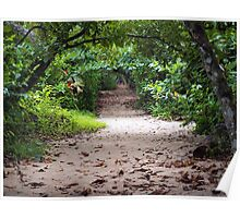 Sandy path in the jungle of Costa Rica Poster