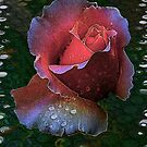 Raindrops on Roses by Elaine Game
