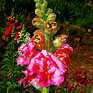 Double snapdragon by Elaine Game
