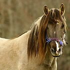 Horse looking at you. by Gary Boudreau