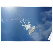 Jellyfish under water surface Poster
