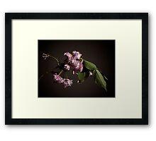 Fleur sur Branche Framed Print