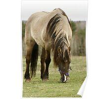 Horse In a Hastings Nova Scotia field. Poster