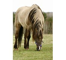 Horse In a Hastings Nova Scotia field. Photographic Print