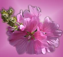pretty summer pink garden flowers photo art.  by naturematters