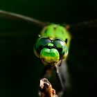 Dragonfly by PaulWilkinson