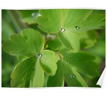 small leaves after the rain Poster