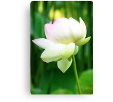 Lotus Flower - Big Bone Lick Gardens, Kentucky Canvas Print