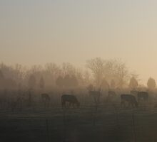 Cattle in the morning by Jeff Jackson