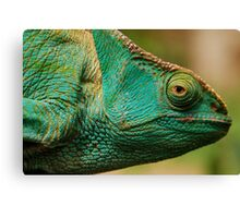 karma chameleon? Canvas Print