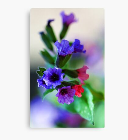 The Magnificent Mrs. Moon -- Pulmonaria Canvas Print