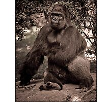 Just A Cuddly Guy In A Pensive Mood Photographic Print