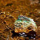Treasue at the Waters Edge by Vicki Pelham