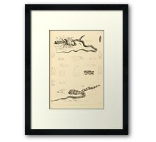 The Reptiles of British India by Albert C L G Gunther 1864 0521 Snakes Framed Print