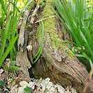Little Snail On A Mossy Log by Daisy-May