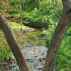 Nature's Stream by RWaters