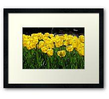 Tulips! Framed Print
